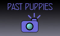 past-puppies